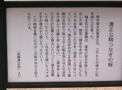 400sakura.jpg